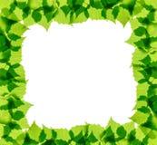 El abedul verde sale del marco Foto de archivo libre de regalías