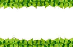 El abedul verde sale del marco Fotos de archivo libres de regalías