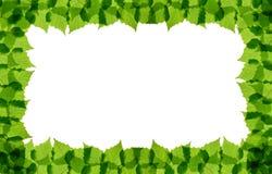 El abedul verde sale del marco Imagenes de archivo