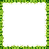 El abedul verde sale del marco Imágenes de archivo libres de regalías