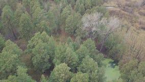 El abejón aéreo tiró sobre el bosque del otoño y las chimeneas que fumaban de fábricas detrás de él, contaminando el ambiente almacen de metraje de vídeo