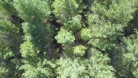 El abejón aéreo tiró sobre el bosque noreuropeo tirado en 4K almacen de metraje de vídeo