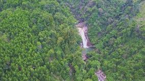 El abejón muestra el río de la montaña entre selva en montaña