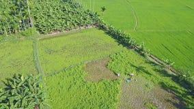 El abejón quita de granjeros en alto del campo sobre paisaje almacen de metraje de vídeo