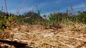 El abejón saca sobre campos de la lavanda en Francia almacen de metraje de vídeo