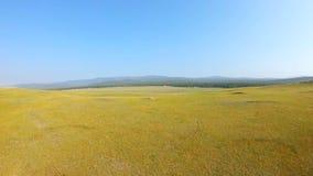El abejón vuela adelante sobre el prado amarillo almacen de video