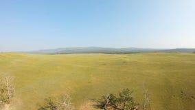 El abejón vuela detrás sobre el prado y la costa amarillos almacen de metraje de vídeo