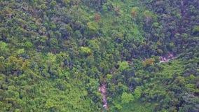 El abejón vuela sobre la corriente rocosa que corre en selva salvaje