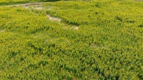 El abej?n tir? el paisaje esc?nico de la visi?n a?rea de la granja de la agricultura en el campo metrajes