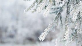 El abeto helado ramifica el día de invierno, cacerola almacen de video