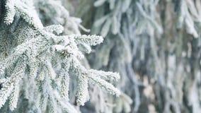 El abeto helado ramifica el día de invierno, carro almacen de metraje de vídeo