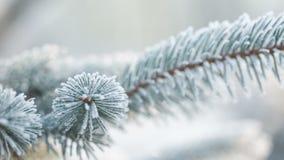 El abeto helado ramifica el día de invierno, carro metrajes
