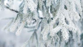 El abeto helado ramifica el día de invierno, carro almacen de video