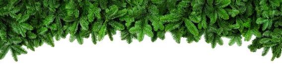 El abeto verde fresco ramifica, frontera ancha de la Navidad foto de archivo libre de regalías