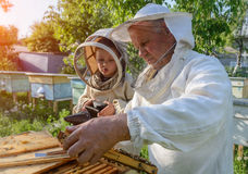 El abuelo experimentado del apicultor enseña a su nieto que cuida para las abejas Apicultura El concepto de transferencia de Fotografía de archivo libre de regalías