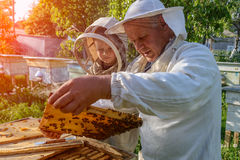 El abuelo experimentado del apicultor enseña a su nieto que cuida para las abejas Apicultura La transferencia de la experiencia Foto de archivo libre de regalías