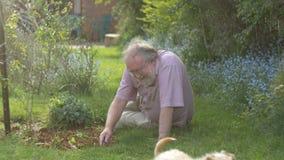 El abuelo retiró el retiro adulto mayor maduro mayor que cultivaba un huerto con el perro almacen de video