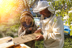 El abuelo y el nieto del apicultor examinan una colmena de abejas Fotos de archivo