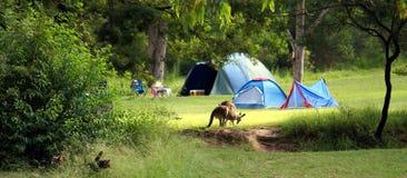 El acampar en Australia Foto de archivo