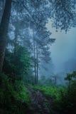 el acampar en la niebla Fotos de archivo libres de regalías