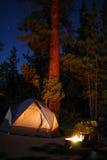 El acampar en los abetos Fotografía de archivo