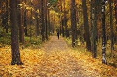 El activar en el parque del otoño Fotos de archivo