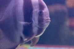 El acuario adorna la colección de los pescados Imagenes de archivo