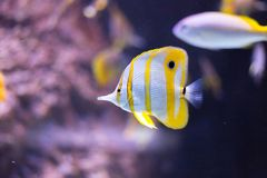 El acuario adorna la colección de los pescados Foto de archivo