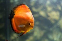 El acuario adorna la colección de los pescados Fotos de archivo libres de regalías