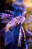 El acuario adorna la colección de los pescados Fotografía de archivo