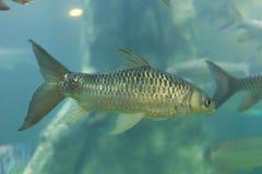 El acuario adorna la colección de los pescados Imagen de archivo libre de regalías