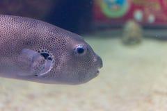 El acuario adorna la colección de los pescados Fotos de archivo
