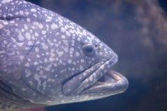 El acuario adorna la colección de los pescados Imagen de archivo