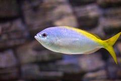 El acuario adorna la colección de los pescados Foto de archivo libre de regalías