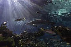 El acuario de Ripleys - Toronto, Ontario Imagen de archivo