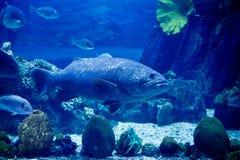 El acuario en Dubai imágenes de archivo libres de regalías