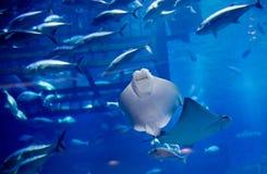 El acuario en Dubai foto de archivo
