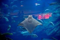 El acuario en Dubai fotografía de archivo libre de regalías
