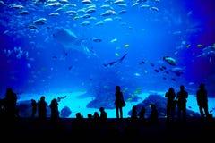 El acuario más grande en el mundo. Atlanta, Georgia. Fotografía de archivo libre de regalías