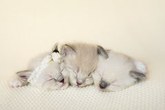 El acurrucarse adorable de tres gatitos imagen de archivo