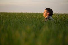 El adolescente miente en la hierba alta en la puesta del sol Imagen de archivo libre de regalías