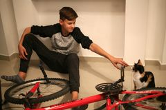 El adolescente repara la bicicleta Un muchacho juega con un gato y repara una bicicleta Fotos de archivo libres de regalías