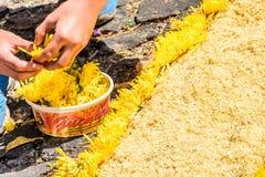 El adornamiento del serrín teñido prestó la alfombra, Antigua, Guatemala Foto de archivo