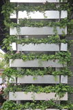 El adorno de la planta verde de la ayuda en Shenzhen Imagen de archivo libre de regalías