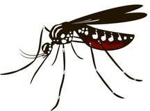 El aedes del mosquito Foto de archivo