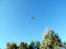 El aeroplano está volando en cielo azul Imagen de archivo