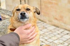 El afecto de un perro compensa todo que ha sucedido durante el día imágenes de archivo libres de regalías