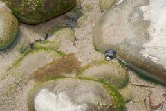 El aferrarse en la roca Imagen de archivo libre de regalías