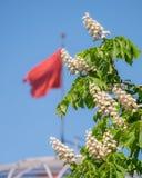 El agitar de la bandera de Victory Day pueda Imagenes de archivo
