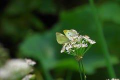 El agitar de las mariposas foto de archivo